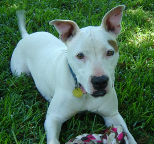 Adopt Bianca On Gone Animals We Failed Or Status Unknown