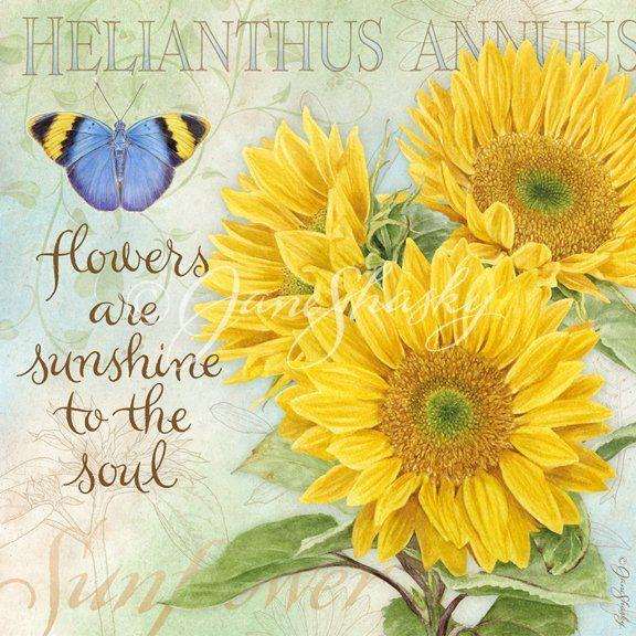 "sunflowers - ""flowers sunshine"