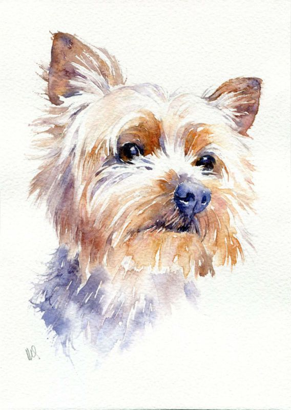 Original watercolour pet painting yorkshire terrier dog - Dessiner un yorkshire ...