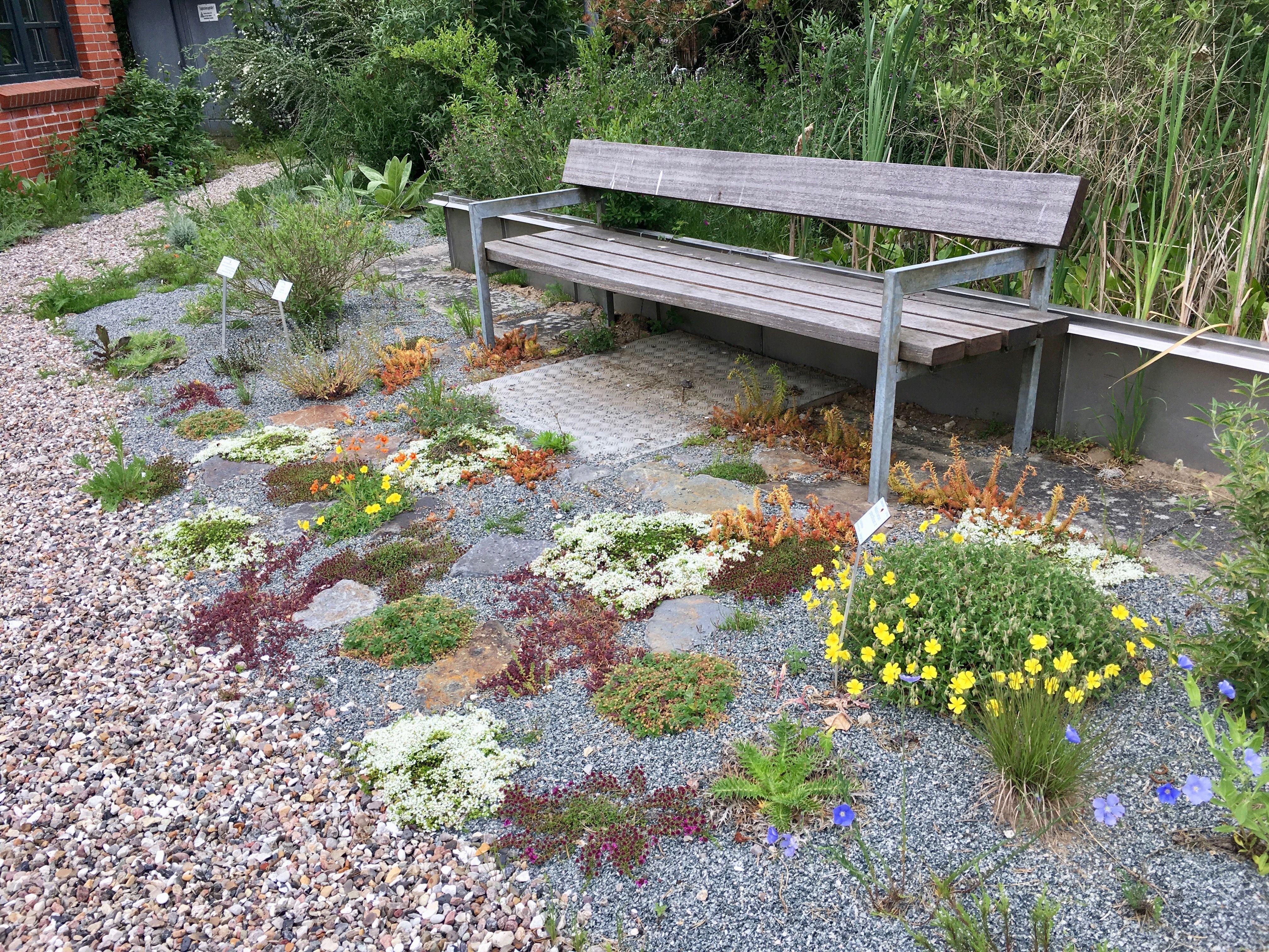 Stauden Fur Bienen Und Andere Insekten 2 Qm In 2020 Stauden Garten Pflanzen Garten