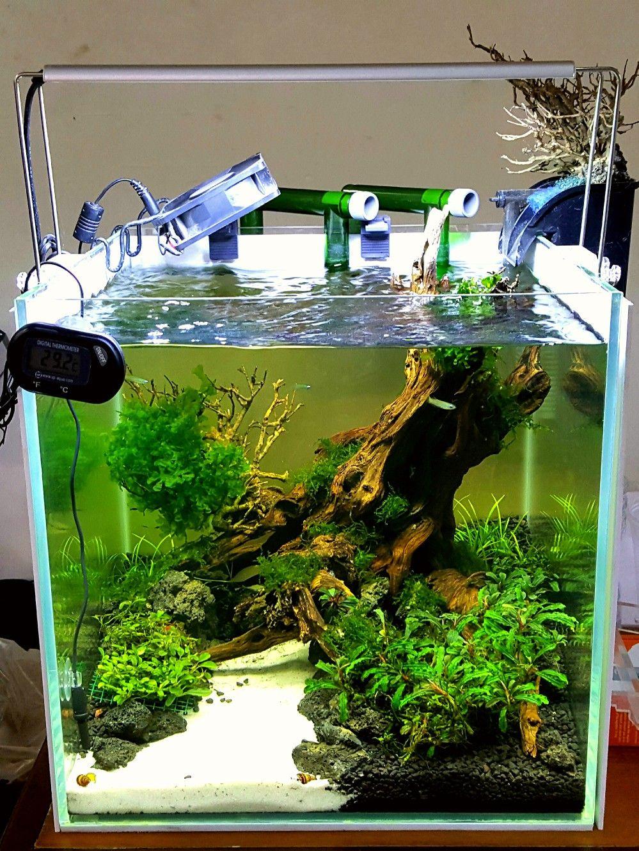 Pin de jorge garc a en dise os de acuarios pinterest for Disenos de acuarios