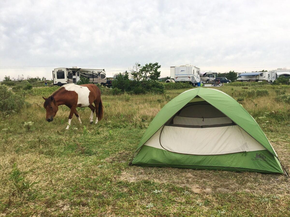 Visit The Famous Ponies And Camp At Assateague Island