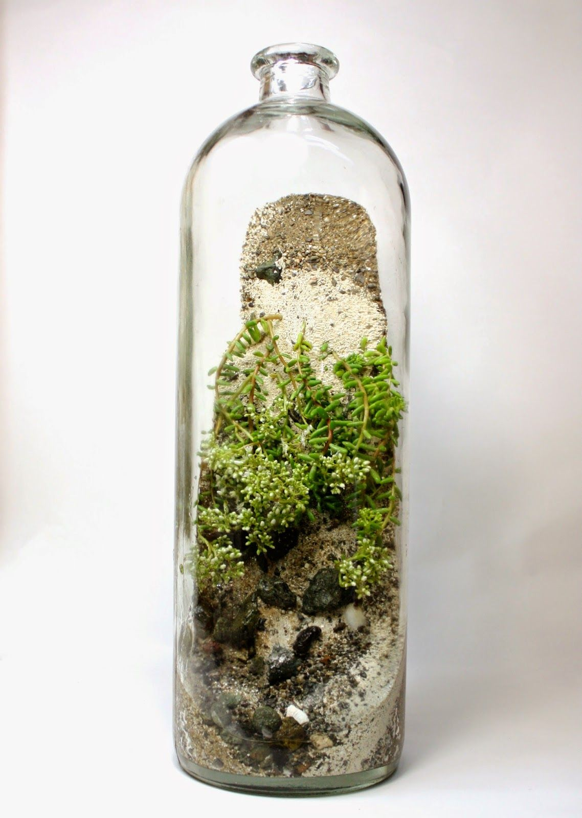 The slug and the squirrel terrariums pinterest squirrel