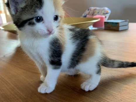 Kitten zu vergeben Hauskatze, Bauernhofkatze (mit