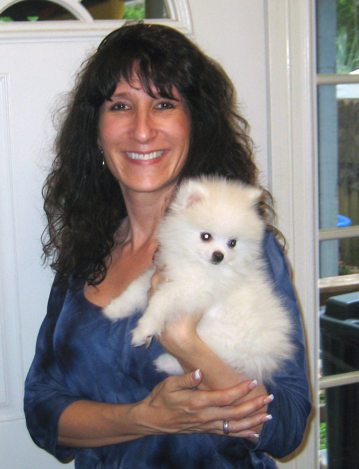 Teacup Pomeranian Puppies For Sale In Tampa Florida Poofy Poochies