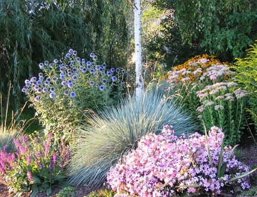 Image Result For Xeric Gardens