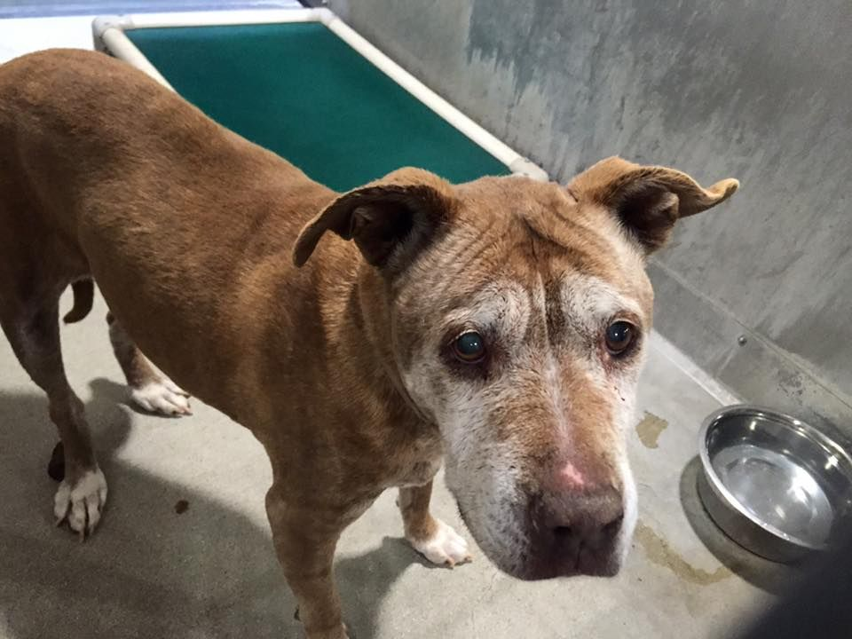 No One To Claim Senior Dog Left At Busy Animal Control Agency Senior Dog Animal Control Dogs