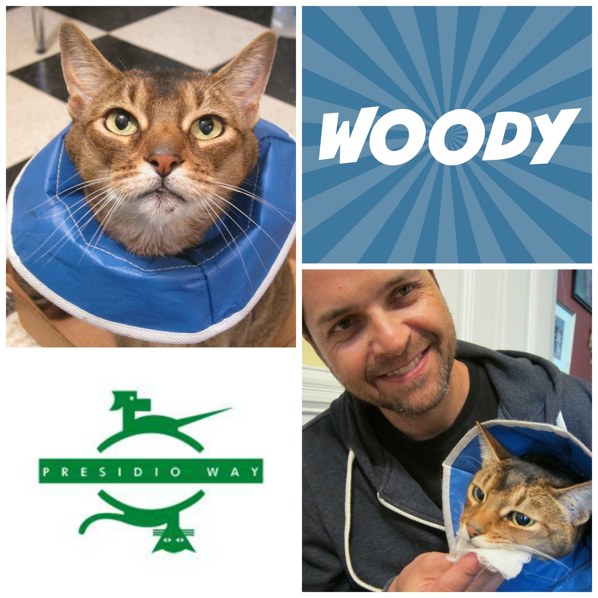 Woody came to us a few weeks ago with a case of feline