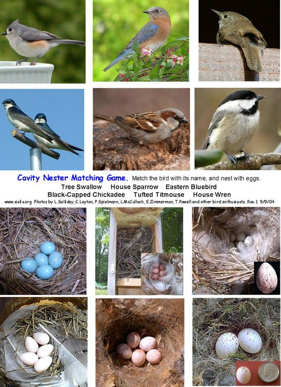 Birds And Their Matching Eggs What A Great Game Birds