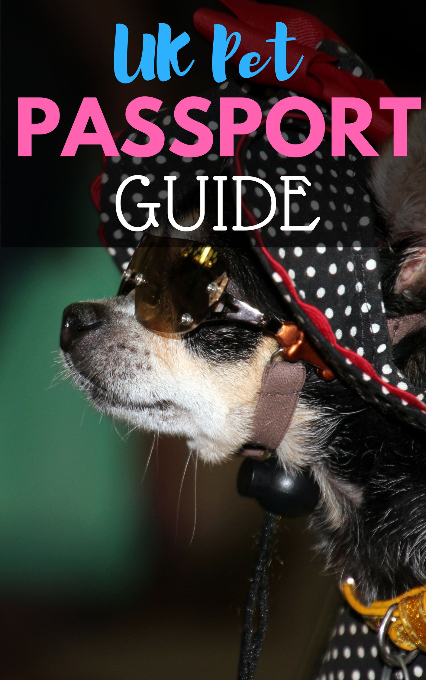 Pet Passport Requirements Costs Validity And List Of Covered