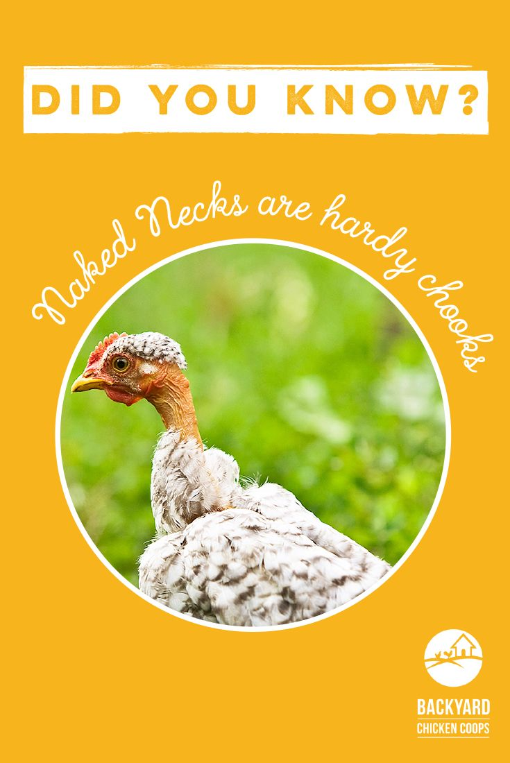 How To Keep Your Chickens & Their Coop Warm All Winter ...