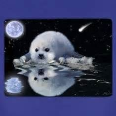 baby harp seal images - Bing images