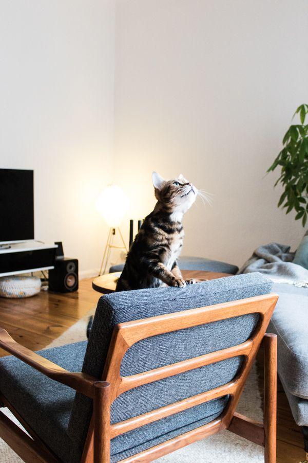 NEUE Kategorie  Katzenbesitzer und ihr Zuhause - Die Homestory - möbel wohnzimmer modern