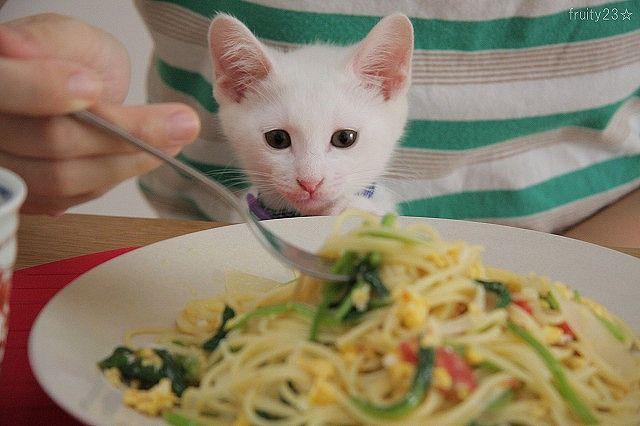 Kuroten loves pasta !