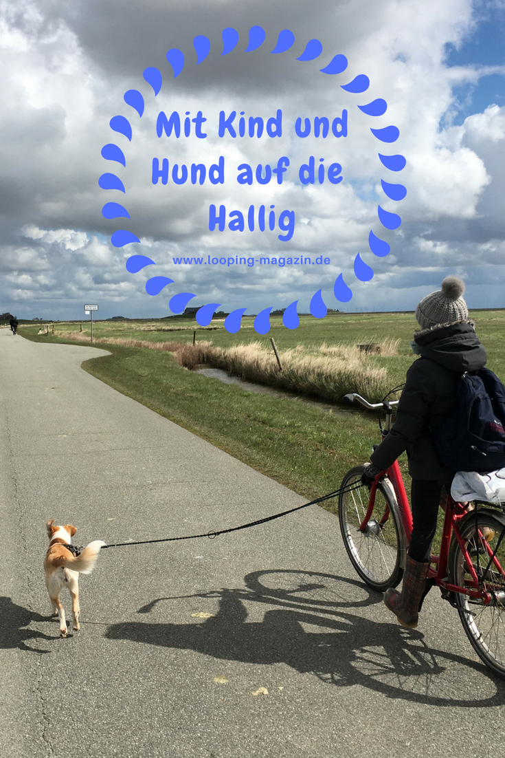 Tage Im Meer Mit Kind Und Hund Unterwegs Auf Langeness Hund Unterwegs Urlaub Mit Hund Und Hunde