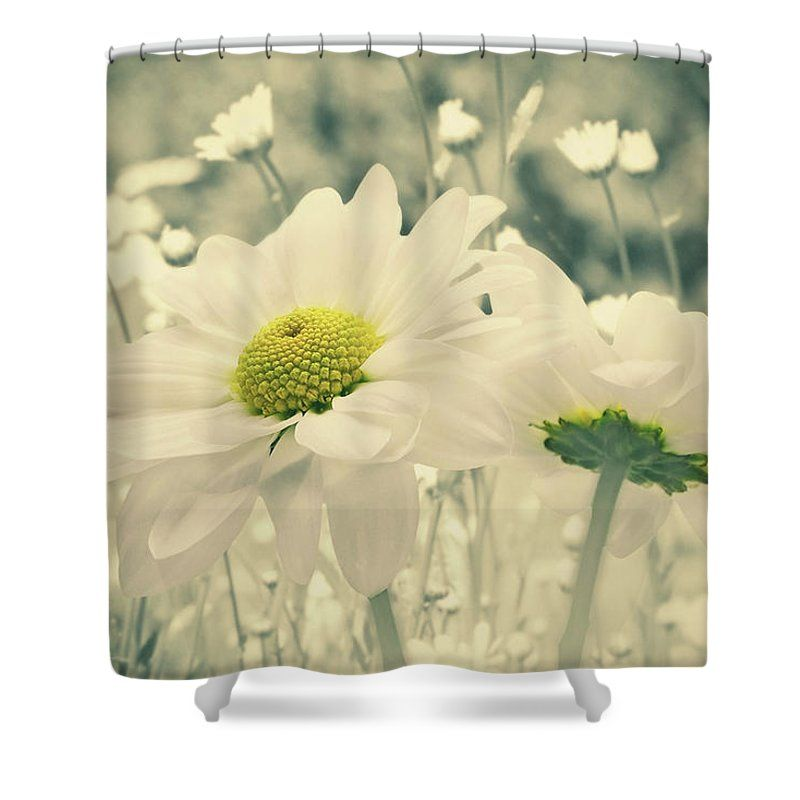 Softness Daisy Shower Curtain By Larysa Koryakina Curtains