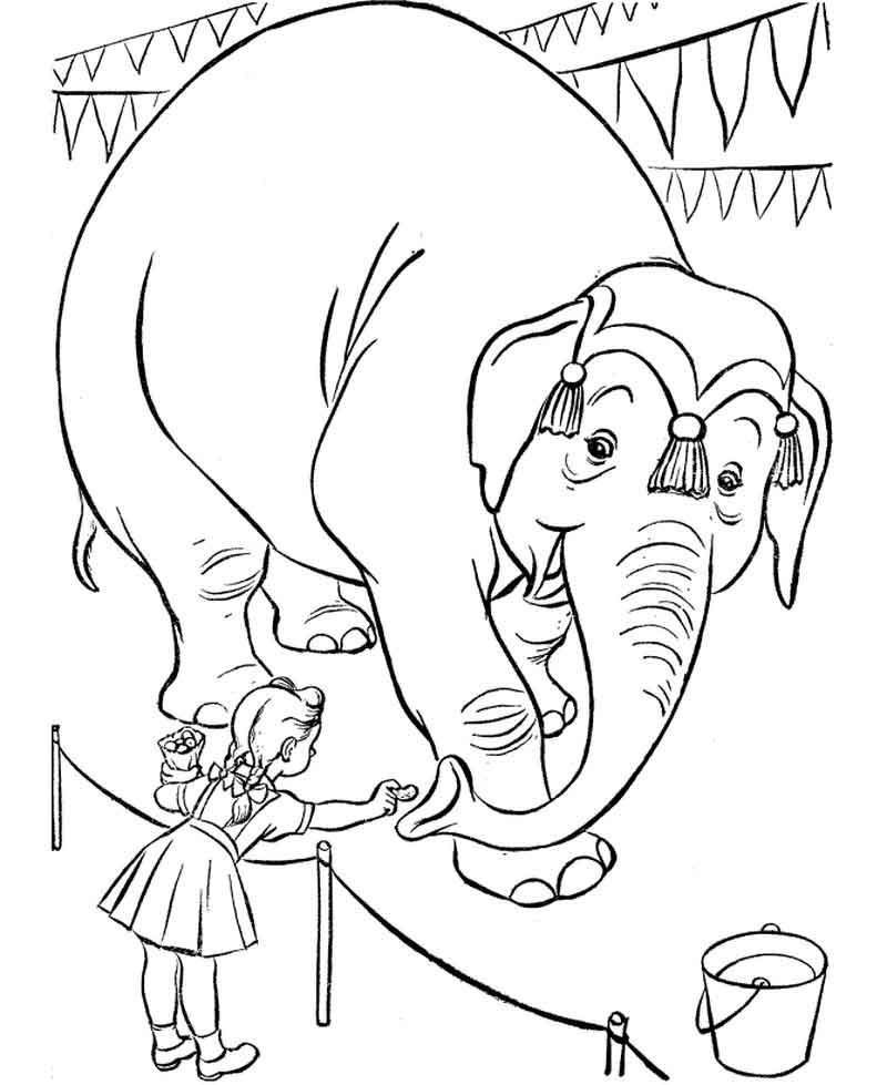 Circus Animal Coloring Pages From Category Find Out More Cool