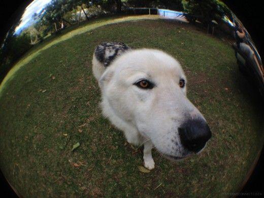 Hello ! on fisheye lens