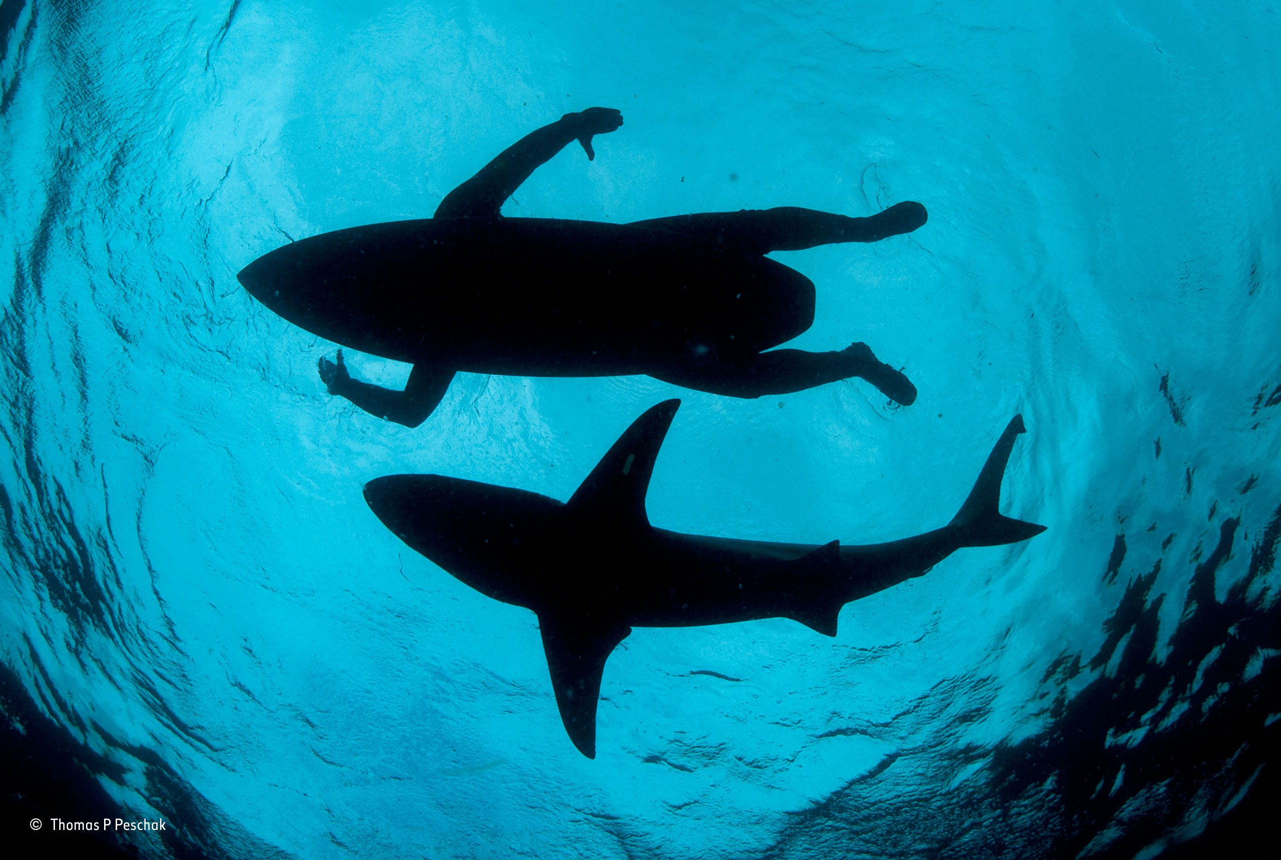 The shark surfer