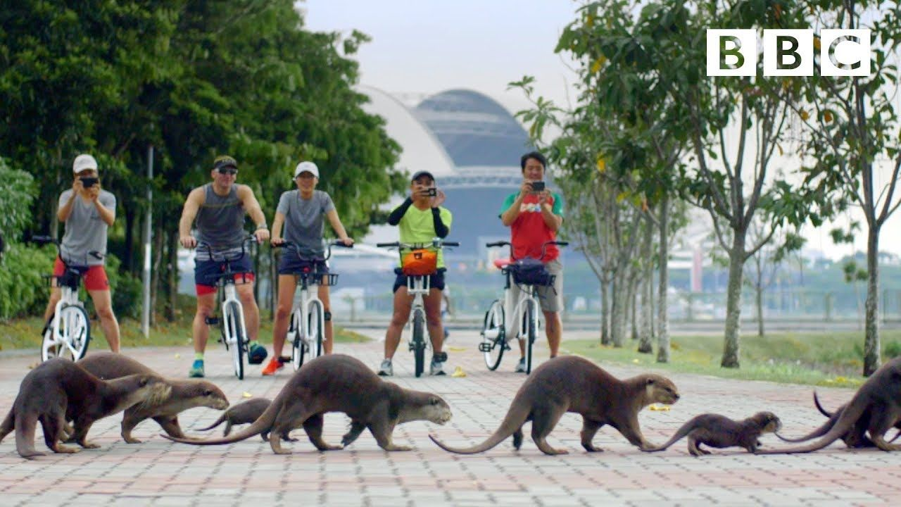 Why this adorable otter family took over Singapore's