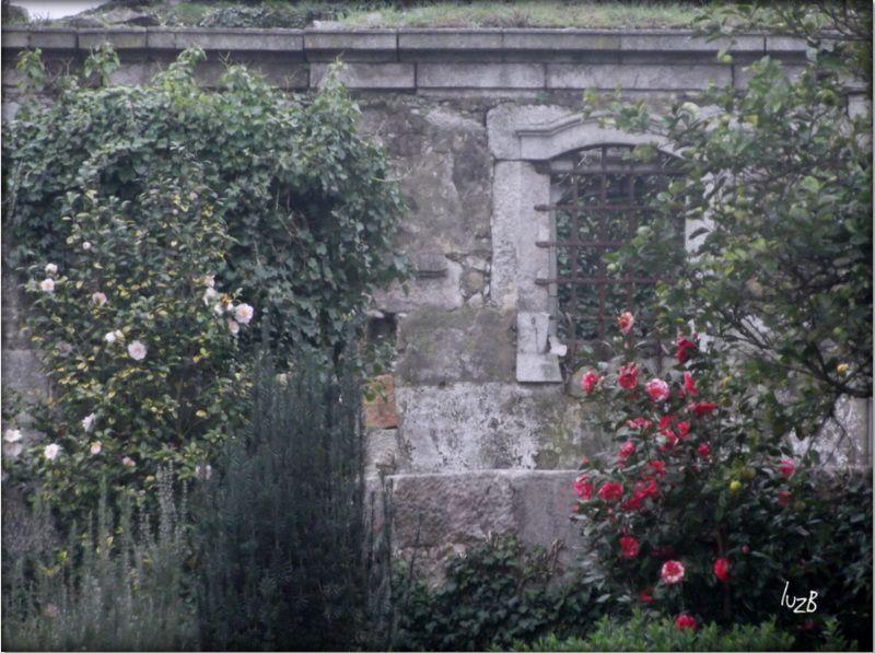 Ruínas floridas   Capela da Quinta do Covelo