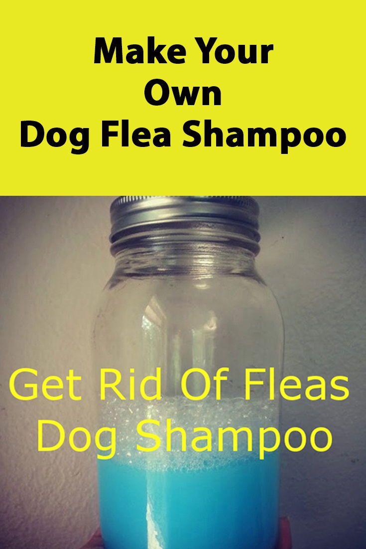 Diy dog remedies flea shampoo for dogs homemade dog
