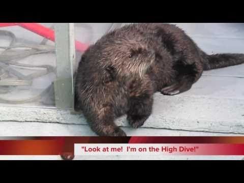 Sneak Peek of OTTER 501 the Movie -- Otter 501 Gets a Little Help - YouTube