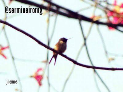 """Ser mineiro: """"Se deseja ser livre assim como os pássaros, abra ..."""