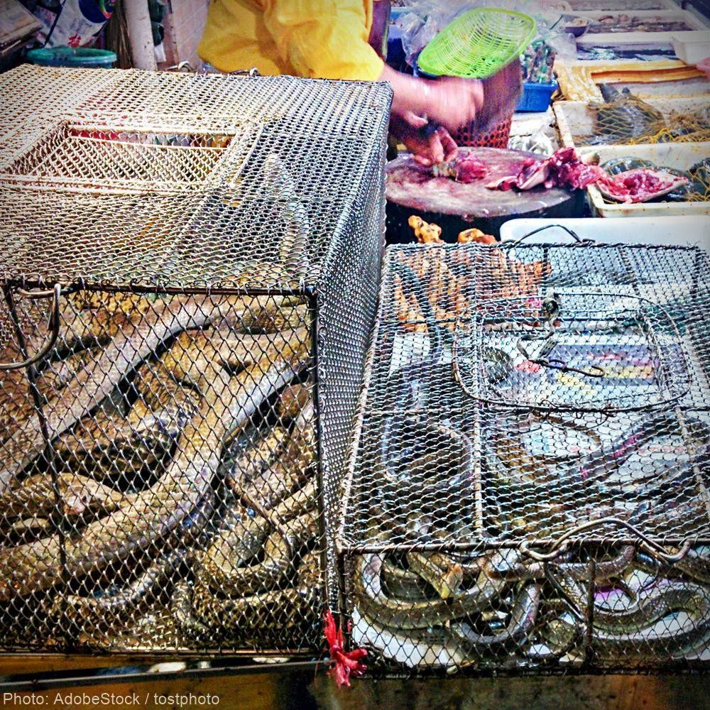 Live Animal Markets Must Be Permanently Banned To Prevent Another Pandemic | Take Action @ The Animal Rescue Site