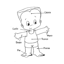 Resultado De Imagen Para Dibujos Cuerpo Humano Para Pintar Silueta Del Cuerpo Humano Cuerpo Humano Dibujo Cuerpo Humano