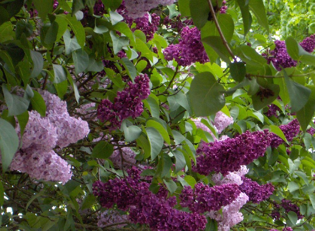 Conjunto en arbustos Flores Pinterest