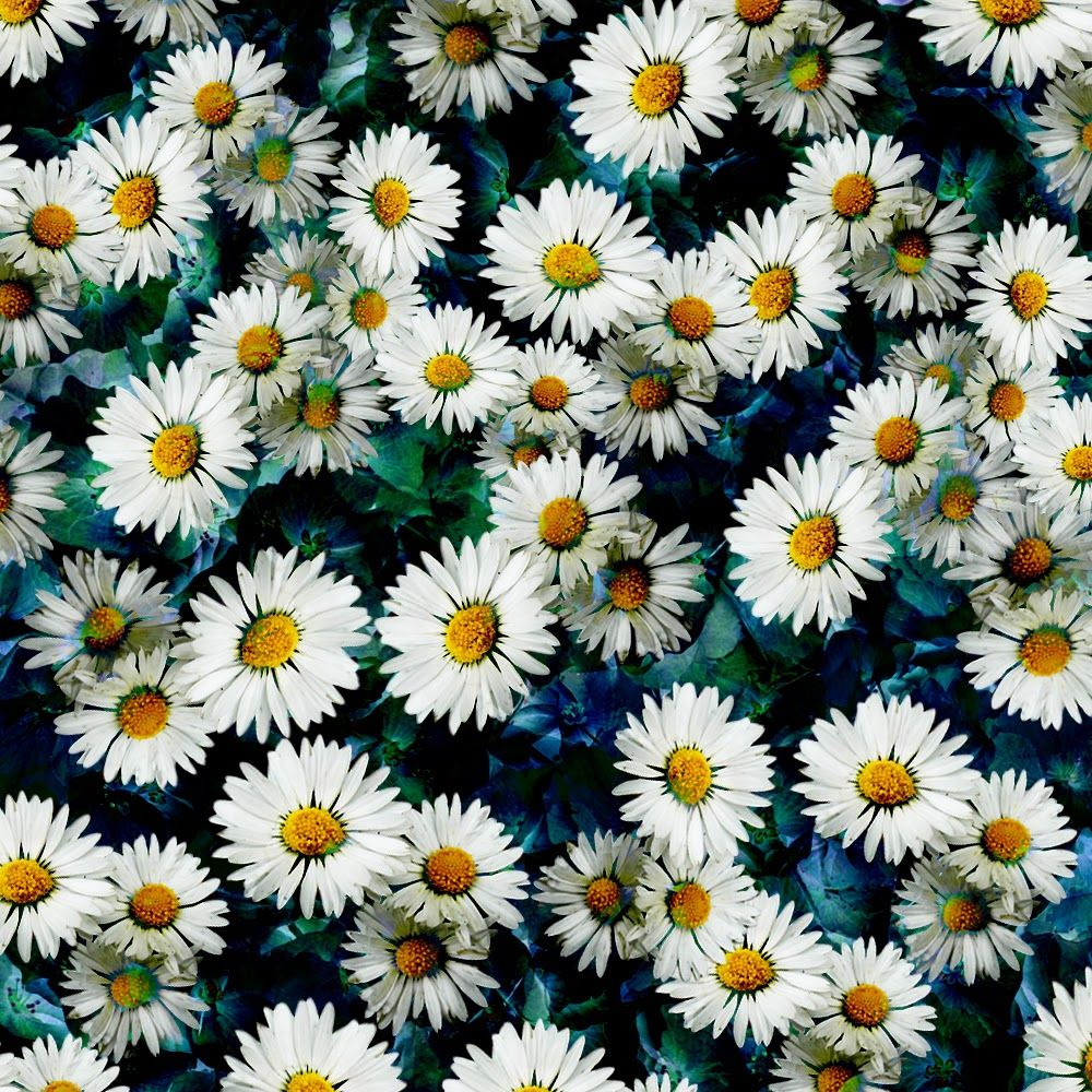 Viewing Gallery For Daisy Background Twitter Wallpaper Iphone Summer Cute Flower Wallpapers Daisy Wallpaper