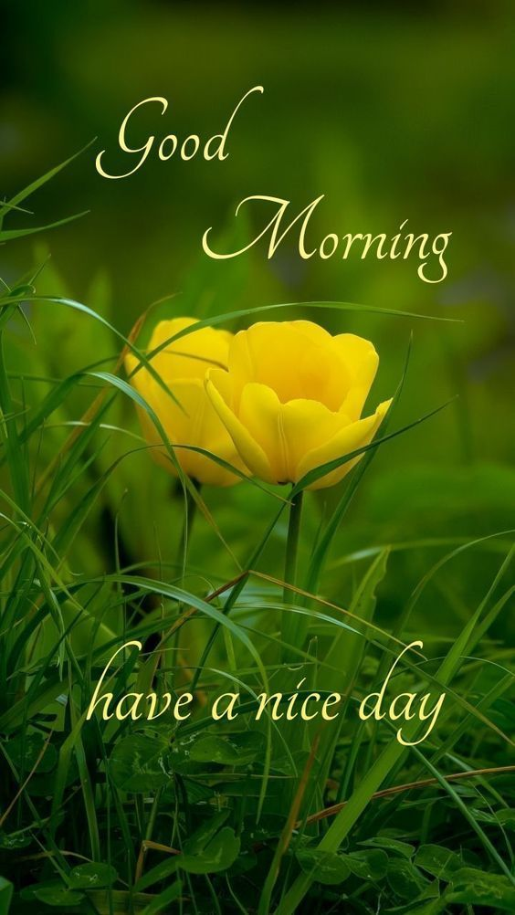 Looking for some flower images then you come to the right page. Here you will find Best good morning flower photos that you can send to your loved ones.