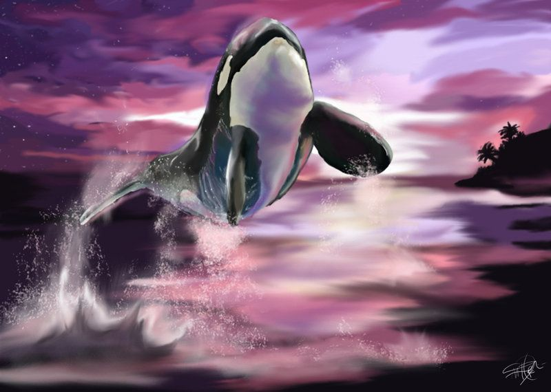 EDIT: (22/03/11) Has been included the recently suggested type D Anatomy is a little better. Colorization patterns of Antarctic forms has been changed. Soon there will be another update thank you v...