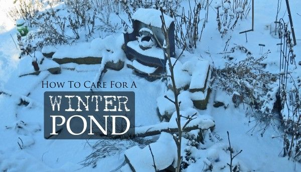 How To Care For Your Pond And Fish In The Winter Empress Of Dirt Garden Winter Prep Outdoor Ponds Winter Garden