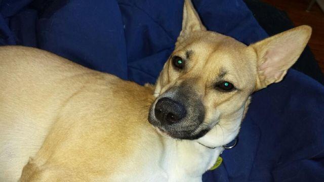 Lost Dog Husky Hamilton On Canada L8s 1t5 Lost And Found
