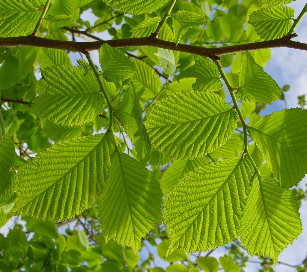 new leaves 2 | por Heather*C