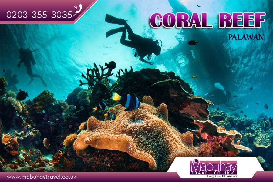 Coral Reefs, Palawan Coral reefs are diverse