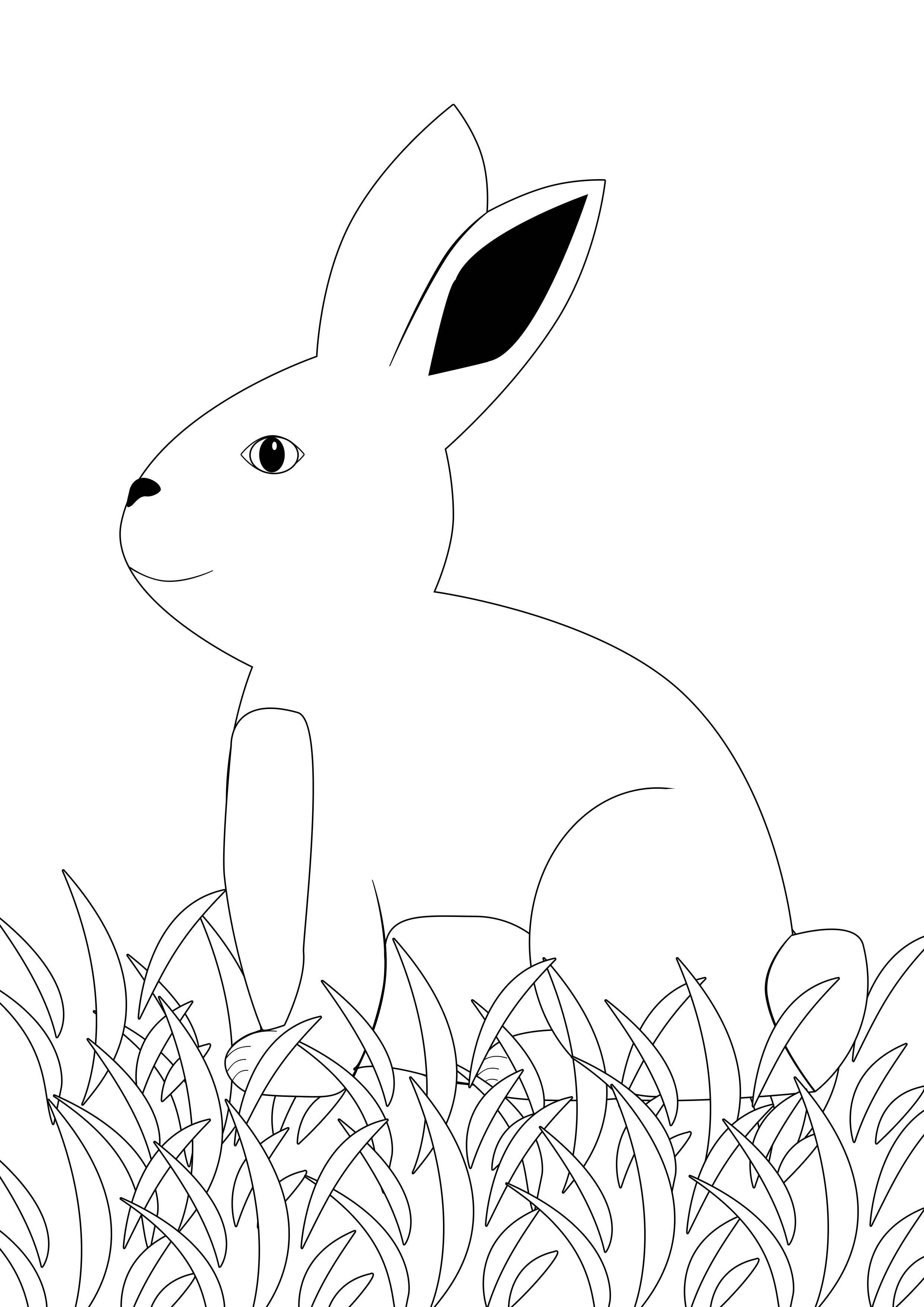 Einzigartig Hase Zum Ausdrucken Farbung Malvorlagen Malvorlagenfurkinder Ausmalbild Hase Malvorlage Hase Osterhase Zeichnen