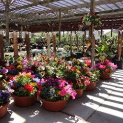Welcome To Best Of Las Vegas Star Nursery