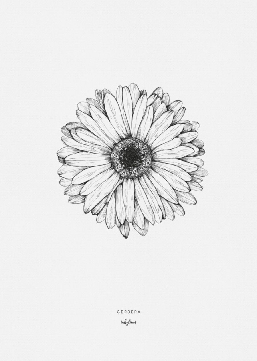 Printables Gerbera Sunflower Tattoos Daisy Tattoo Gerbera Daisy Tattoo