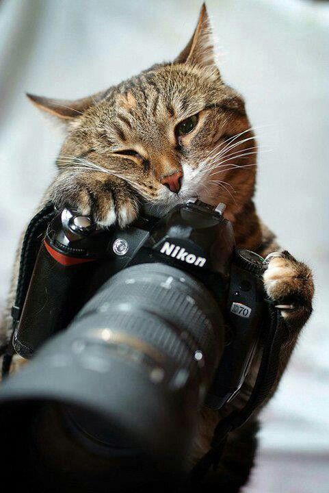 Don't eat the camera kitty!