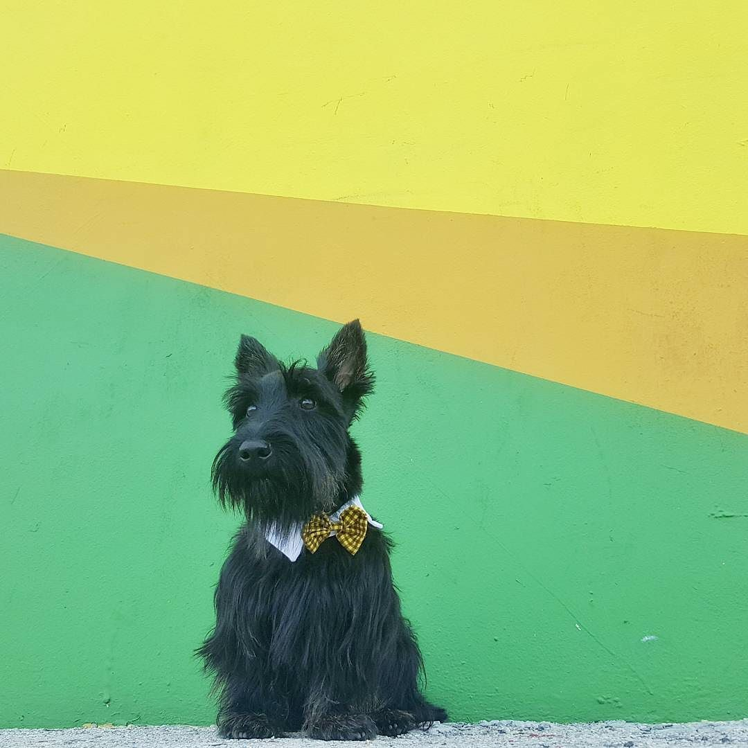 Day 2 of the #woofandwalls series: Make sure to wear a bow tie when ...