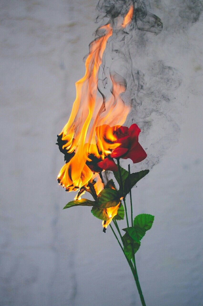 Roses On Fire Aesthetic Wallpapers Aesthetic Iphone Wallpaper Iphone Wallpaper