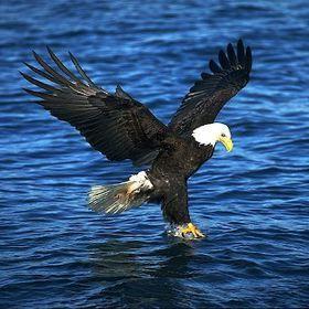 Google Image Result for http://www.petergreenberg.com/wp-content/uploads/2010/03/fishing-eagle.jpg