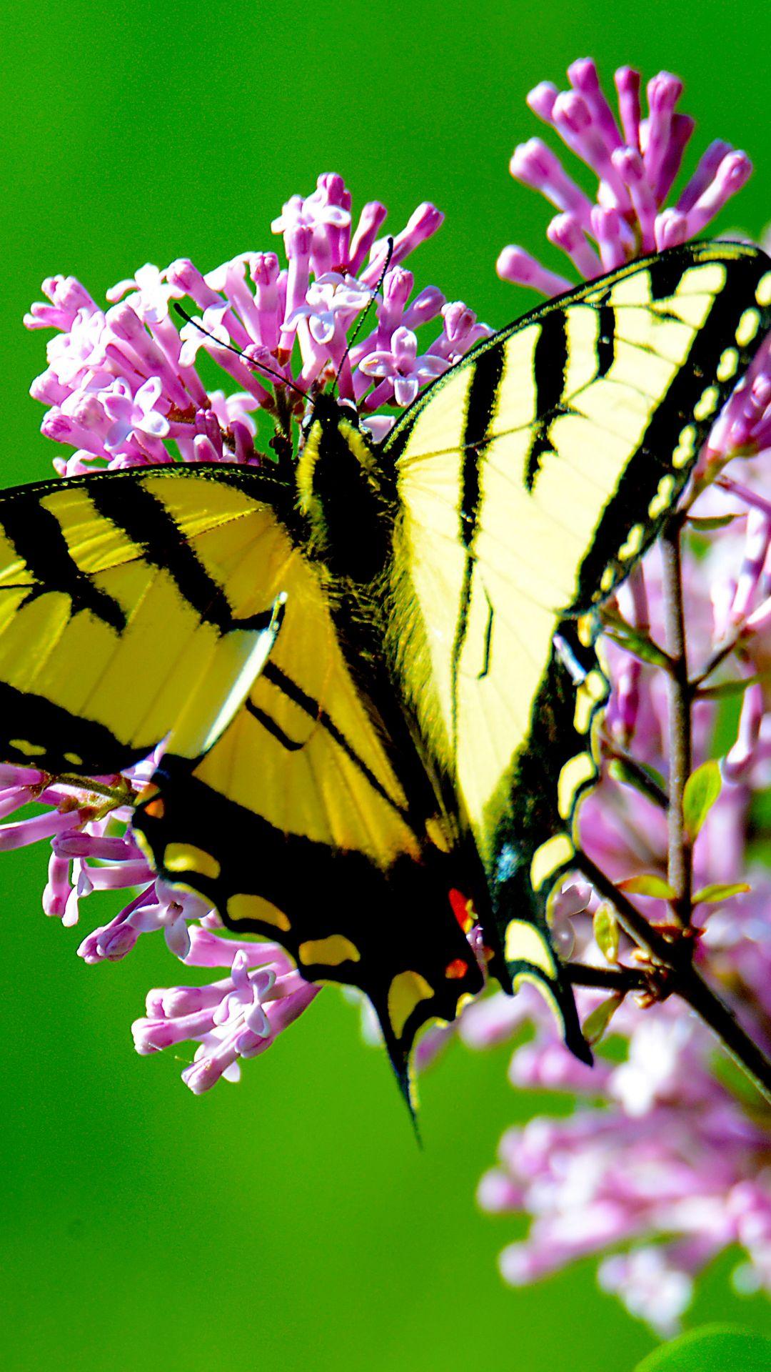 Aesthetic Butterfly Background in 2020   Butterflies ...