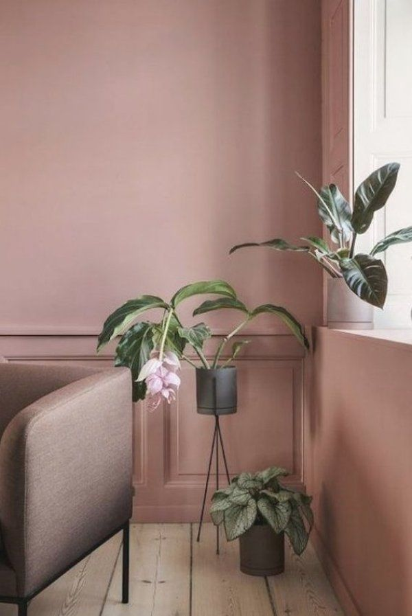 id  e de d  coration originale pour le salon d  co rose poudre mur bois parquet canap   fauteuil plantes vertes fauteuil taupe living coral couleur Pantone de l ann  e 2019 Color of the year 2019 Pantone very cute decor for a living room pink interior #pantone #livingcoral #coloroftheyear #pantone2019 #pantonecoloroftheyear #coloroftheyear2019 #blush #pinkinterrior #homedecor #decoratingideas #homedesign #decortrend #livingroomideas