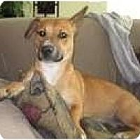 Adopt A Pet Coco Family Dog Greensboro Nc Kitten