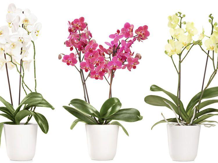 comment rempoter ses orchid es jardin int rieur. Black Bedroom Furniture Sets. Home Design Ideas