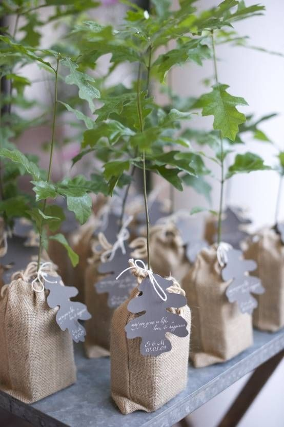 Oak Tree Seedlings As Wedding Favors Bruiloft In 2019 Wedding